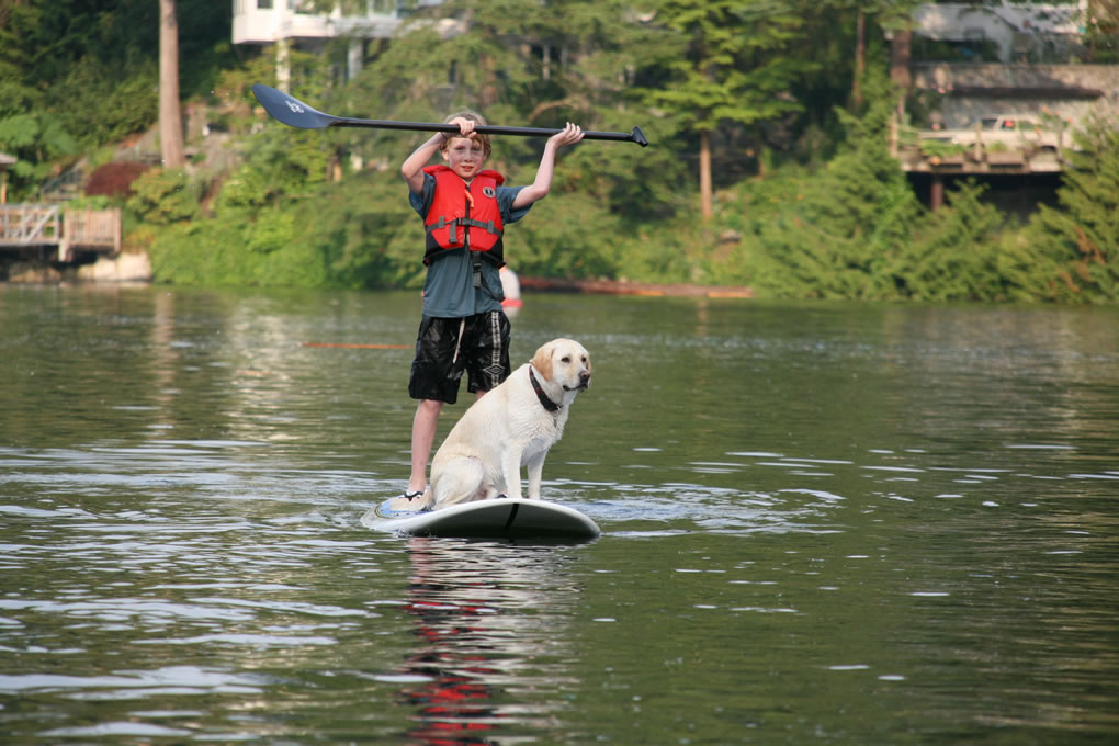 doggie-sup-paddle